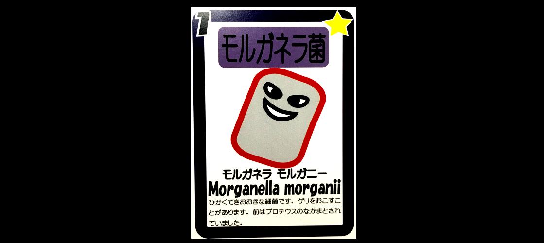 モルガネラ菌